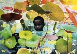 likeafieldmouse:  Ruud van Empel- World (2005)