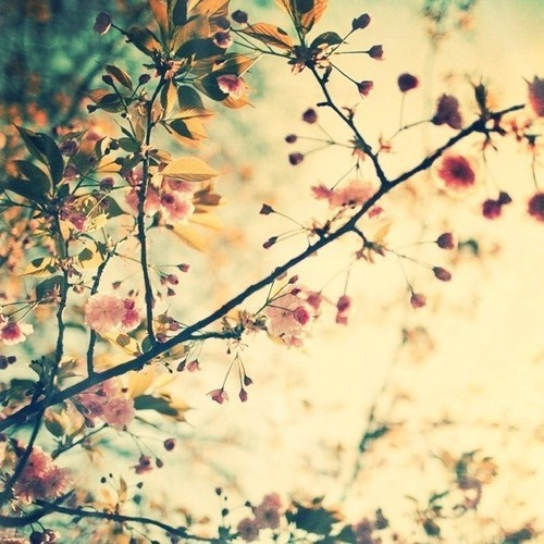 Spring Has Sprung | via Tumblr 人が @weheartit.com を利用中- http://whrt.it/10iO493