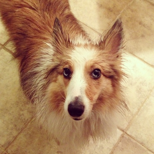 baileyblu:  After a walk in the rain