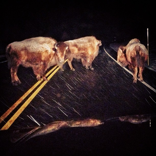 Traffic cops, late night N. #Yellowstone.
