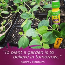 #StartSeeds #GrowFood #LiveForever