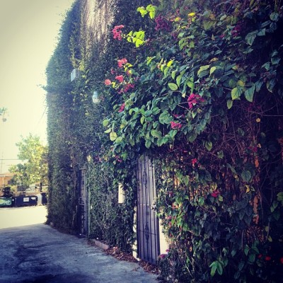 Living #green wall in Little Havana, #Miami