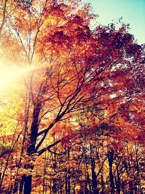 crisp-air-fallen-leaves:  Autumn 🍁🍂🌻 on We Heart It.