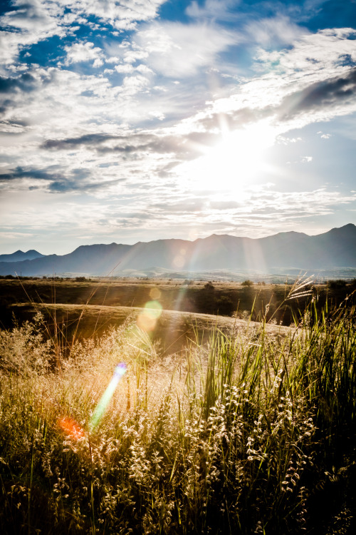 unicornandlionheart:  'Drop Of Rain' - Patagonia, United States Of America BySingle Step Photography