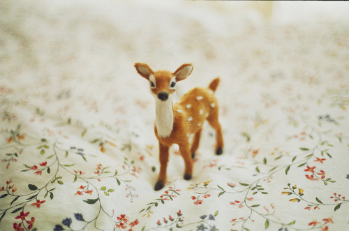 capitowl:  my toy by cecilia-ivy on Flickr.