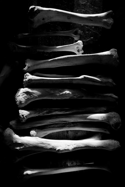 Bones. Ryan Matthew's Collection. Photo by Sergio Royzen.