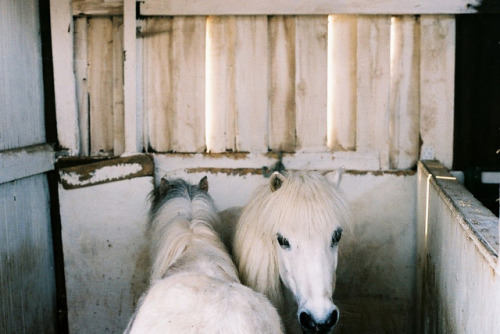 halcyont:  friends by kirstin kerr on Flickr.