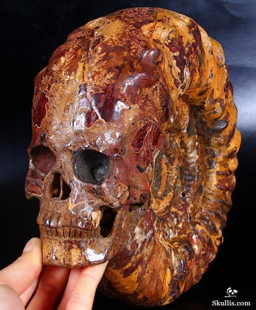 Human Skull carved from Ammonoidea-Fossil