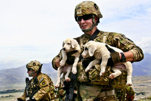 A U.S. Army soldier holds two puppies he found at an observation post in the Aziz Khan Kats Mountain Valley range near Jalalabad in Afghanistan's Laghman province, April 15, 2011. (U.S. Army photo by Staff Sgt. Ryan Matson) Look Sarge, Puppies :D (source)  aww :))
