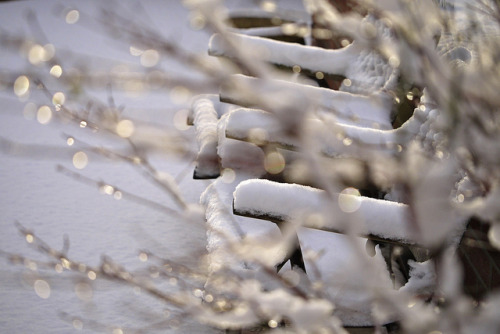 Winter Bokeh by klythawk on Flickr.