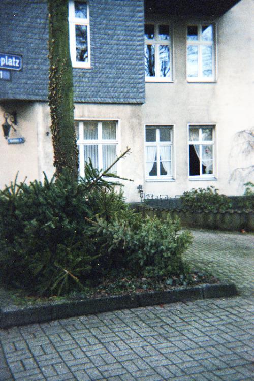 Dortmund - Weihnachtsbäume vor dem Sommer.