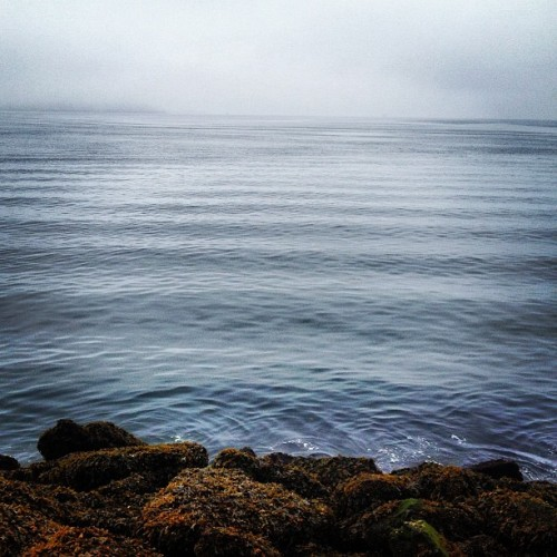 Mornings at the waterfront #latergram #foggy #seattle #pugetsound (at Olympic Sculpture Park Pocket Beach)