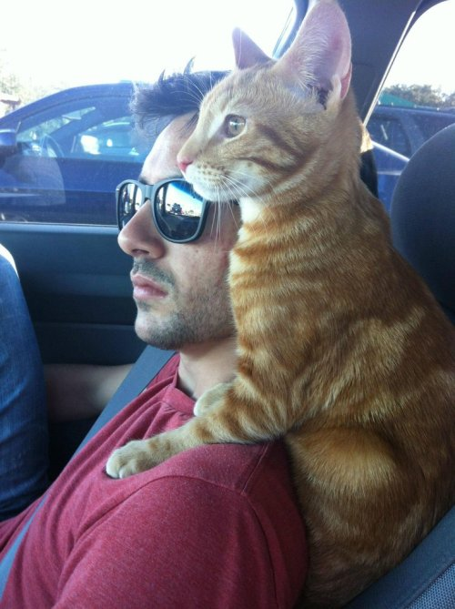 catsamazing:  How my cat likes to sit during our road trips