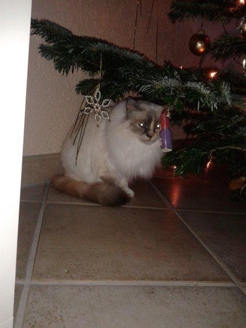 get out of there cat. Christmas is long over. it is much too late for you to be a present.