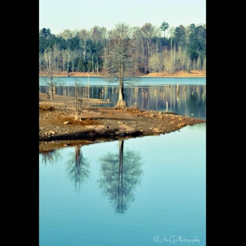 Falls Lake in the winter. #TAGSTAGRAM.APP #landscape #landscapes #landscapestyles_gf #fabscape #ic_landscapes #igcentric_nature #landscape_lovers #landscapelovers #landscapelover #paisaje #paisagem #paysage #epic #beautiful #tagsta_nature #tagsta #tagstagramers #latergram #instahub #view #insta_land #awesome_shots #instaworld_love #igphoto #goodday #clubsocial #fallslake #northcarolina (at Falls Lake Trail)