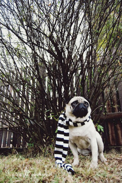 dapperpugs:  No seriously, where the fuck is summer? via