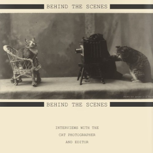 See the making of The Cat Issue at http://youtu.be/sA_cr1s7fKc #behindthescenes #meow