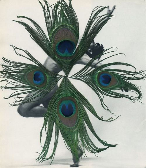 darksilenceinsuburbia:  Carol Bove. Untitled, 2005. Peacock feathers on photograph.