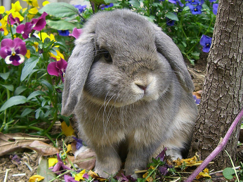 thereisaholeinyourmind:  rachel-is-love:  Bunny!  Just so in a few weeks from now, this will appear in a friend's Dash again…  Bunnies… THEIR EVERYWHERE!!!!!!!!