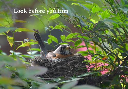 llbwwb:  PSA: by USFWS Urban Bird.Reblog to save Birds:)