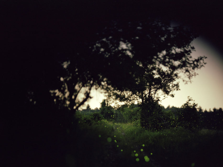 Barbara Bosworth: Fireflies, Massachusetts. 2005.