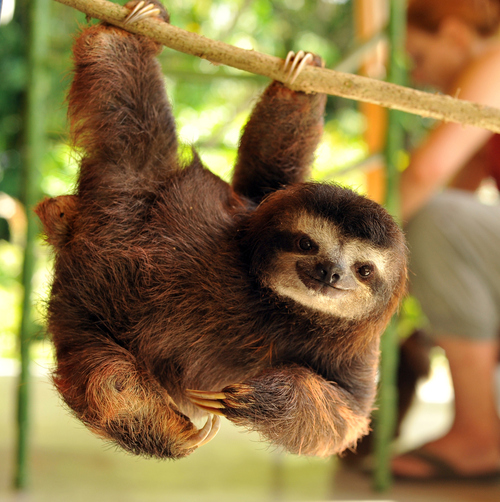followedthefreezingmoon:  I am redeeming myself with a baby sloth.
