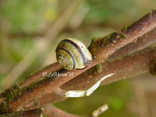 I must have seen plenty of snails today on plants, trees and even on the pathways. It was fun watching them actually. I wonder how far will they go if I make a day time lapse of them :) MORE…