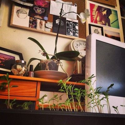 Crazy times… #mac #plants #orchid #corkboard