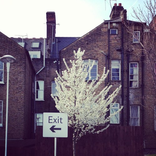 Spring in London. #fvf #travel  (at Hackney Central London Overground Station)