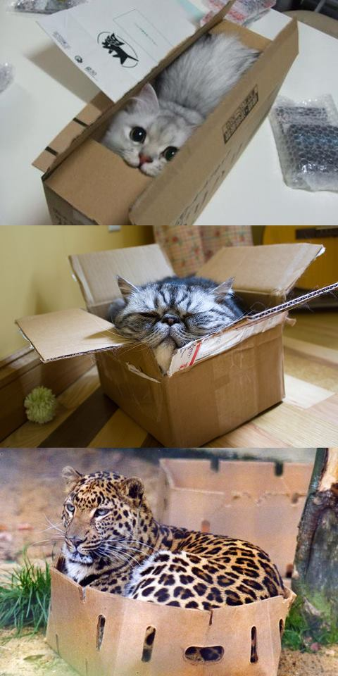 No kitty can resist the box!!