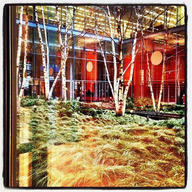 All the trees that are fit to grow @nytimesfashion @mediacraftpr
