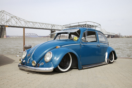 cornell5877:  Old Beetle