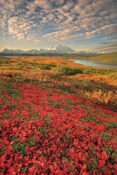 goingwherethewindgoes:  unwrittennature:  Denali Nation Park, Alaska.Via: Holly Bridges  ❤
