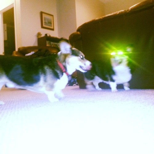 Max with his lazer eye'd pal Teddy  Submitted by: http://specialsouce.tumblr.com/