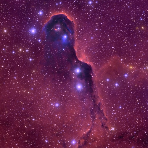 The Elephant Trunk Nebula  This image of the Elephant Trunk Nebula was taken with the Mosaic camera on the WIYN 0.9-meter telescope at Kitt Peak National Observatory near Tucson, Arizona. The Elephant Trunk is a dense, elongated cloud of gas inside a bright cluster of stars known as IC 1396. The trunk conceals many young protostars that are in the process of forming. Image: T.A. Rector (University of Alaska Anchorage) and WIYN/NOAO/AURA/NSF [high-resolution] Read NOAO Conditions of Use before downloading Caption: NOAO (via: Wired Science)