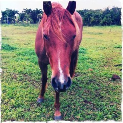 Horse power activate! #horse kauai #animalfriends (at Kapa'a, Kauai)