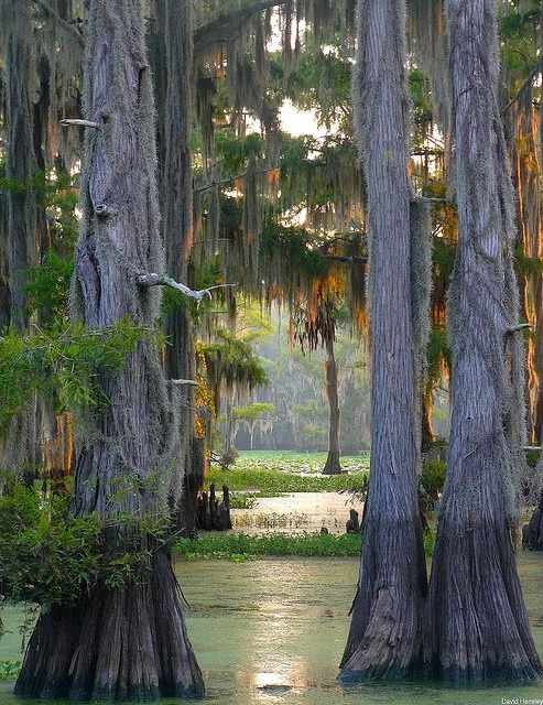 bluepueblo:  Cypress Forest  Caddo Lake, Louisianna photo via jessica