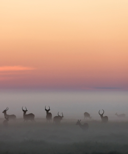 vurtual:  Morning Mist (by Michael Poliza)