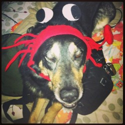 #dog or #crab