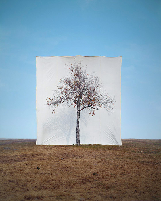 I secretly think reality exists so we can speculate about it  Tree series by Myou Ho Lee