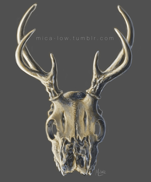 mica-low:  Quick digital painting of a white-tailed deer skull. I've always done my scientific illustration in traditional media and my personal work in digital media, so I thought it was time for a change.