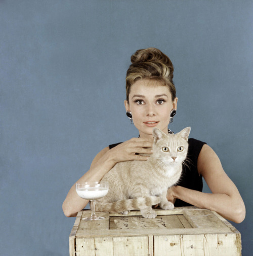 ladiesofthe60s:  Holly Golightly (Audrey Hepburn) and her nameless cat.