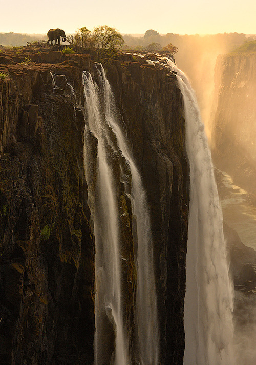 bluepueblo:  Brave Elephant, Victoria Falls, Zambia photo via besttravelphotos