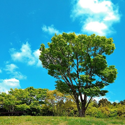 (´∀` )♪ #blue #sky #cloud #tree #lawn #nature #landscape #ashigara #sa #service #area #shizuoka #japan