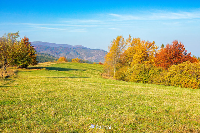 autumnal countryside scenery in mountains. trees in colorful foliage on the grassy meadows. hills rolling in to the distance. wonderful environment of carpathians in fall season on a sunny day - autumnal countryside scenery in mountains. trees in colorful foliage on the grassy meadows. hills rolling in to the distance. wonderful environment of carpathians in fall season on a sunny day #countryside#landscape#autumn#nature#forest#tree#season#background#environment#fall#country