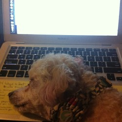 My study buddy quit on me already. Smh #instapets #pets #dogs #work
