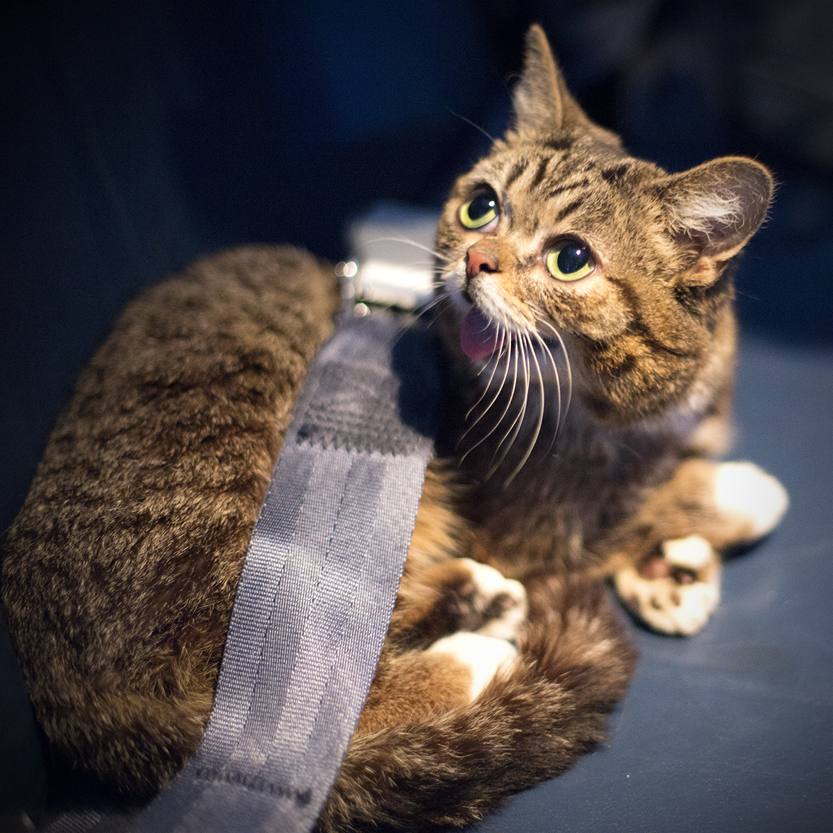 bublog:  BUB on a PLANE. Asking for more fishes, please.