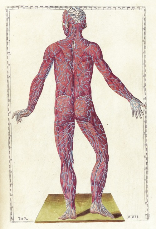 bodyandlight:  Tabulae anatomicae. Andrea Massimini, illustrations by Bartholomeo Eustachi, 1783.