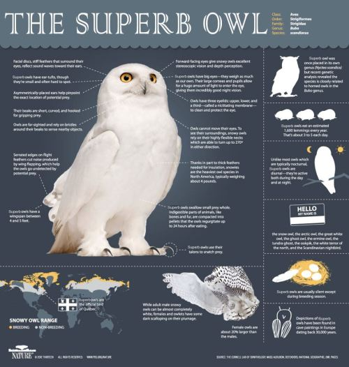 hypervocal:  All the info you on Superb Owl Sunday.  The only Superb Owl that matters today.