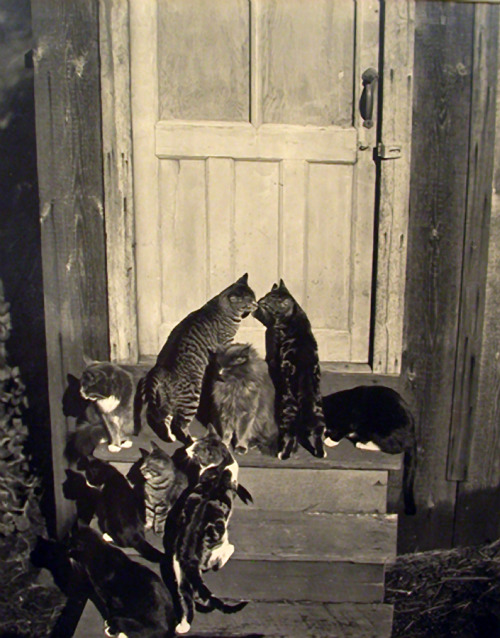 realityayslum:  Edward Weston - Cats at Door, 1944. … via Transverse Alchemy, from the delightful gallery and short bio Masters of Monochrome: Part III- Edward Weston.